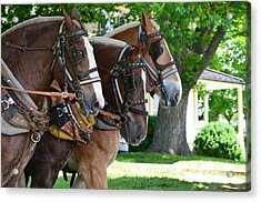 Acrylic Print featuring the photograph The Three Amigos by Cathy Shiflett