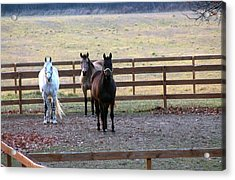 The Three Amigos Acrylic Print by Rhonda Humphreys