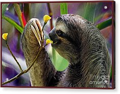 The Three-toed Sloth Acrylic Print by Gary Keesler