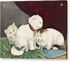 The Three White Kittens Circa 1856 Acrylic Print by Aged Pixel