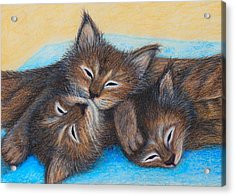 The Three Zzz Acrylic Print