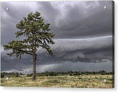 The Thunder Rolls - Storm - Pine Tree Acrylic Print