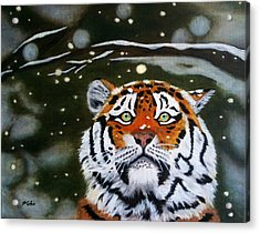 The Tiger In Winter Acrylic Print