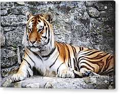 The Tiger Acrylic Print