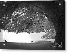The Tree At Mill Pond Acrylic Print