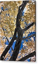The Tree Acrylic Print by David Stine