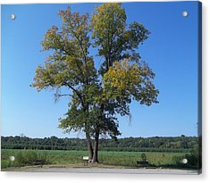 Acrylic Print featuring the photograph The Tree by Eric Switzer