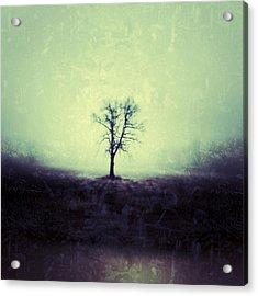 The Tree Acrylic Print by Jeff Klingler