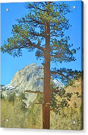 Acrylic Print featuring the photograph The Tree by Marilyn Diaz