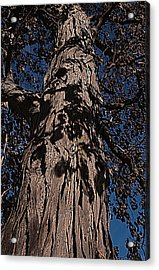 Acrylic Print featuring the photograph The Tree Of Life by Deborah Klubertanz