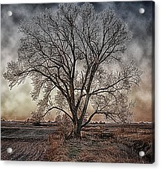 The Tree Of Life Acrylic Print by Kimberleigh Ladd