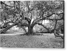 The Tree Of Life Monochrome Acrylic Print by Steve Harrington