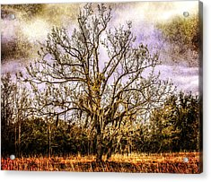 The Tree Acrylic Print by Steven  Taylor