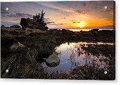 The Tree Stump Acrylic Print by Alexis Birkill
