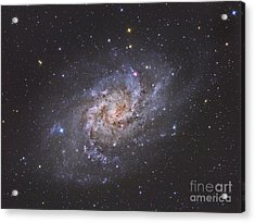 The Triangulum Galaxy Acrylic Print by Reinhold Wittich