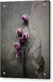 The Tulip Acrylic Print by Kahar Lagaa