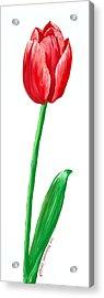 The Tulip Acrylic Print by Kate Holloman
