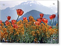 The Tulips In Bloom Acrylic Print by KG Thienemann