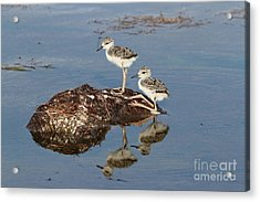 Acrylic Print featuring the photograph The Twins by Jennifer Zelik