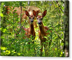 The Twins Acrylic Print by Larry Trupp