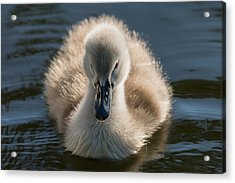 The Ugly Duckling Acrylic Print by Michael Mogensen