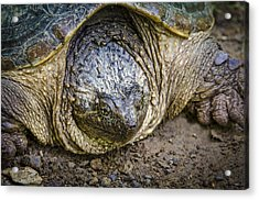 The Ugly Snapper Acrylic Print by Bradley Clay