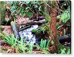 The Unknown Creek Acrylic Print