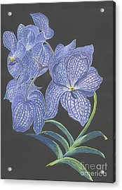 Acrylic Print featuring the painting The Vanda Orchid by Carol Wisniewski