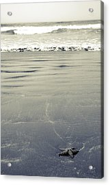 The Vastness Of The Sea Acrylic Print by Lisa Knechtel
