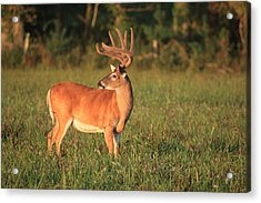Acrylic Print featuring the photograph The Velvet King by Doug McPherson