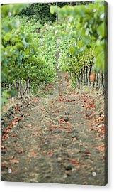 The Vines Acrylic Print by Ariane Moshayedi