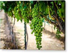 The Vineyard Acrylic Print by David Morefield