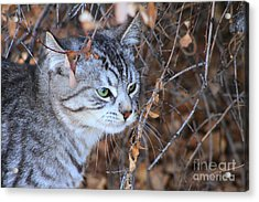 The Visitor Acrylic Print by Alyce Taylor