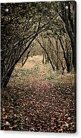 Acrylic Print featuring the photograph The Walk by Meirion Matthias