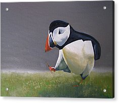 The Walking Puffin Acrylic Print by Eric Burgess-Ray