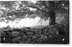 The Walls Of Woodlawn Acrylic Print by Patrick Downey