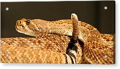 Acrylic Print featuring the photograph The Warning by Brenda Pressnall