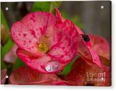 The  Water Drop And The Fly Acrylic Print by Hank Taylor