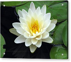 Acrylic Print featuring the photograph The Water Lilies Collection - 02 by Pamela Critchlow