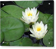 Acrylic Print featuring the photograph The Water Lilies Collection - 06 by Pamela Critchlow