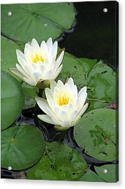 Acrylic Print featuring the photograph The Water Lilies Collection - 07 by Pamela Critchlow