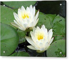 Acrylic Print featuring the photograph The Water Lilies Collection - 08 by Pamela Critchlow
