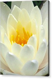 Acrylic Print featuring the photograph The Water Lilies Collection - 10 by Pamela Critchlow