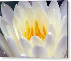Acrylic Print featuring the photograph The Water Lilies Collection - 11 by Pamela Critchlow