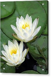 Acrylic Print featuring the photograph The Water Lilies Collection - 12 by Pamela Critchlow