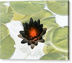 Acrylic Print featuring the photograph The Water Lilies Collection - Photopower 1034 by Pamela Critchlow