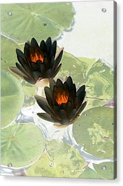 Acrylic Print featuring the photograph The Water Lilies Collection - Photopower 1040 by Pamela Critchlow