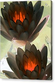 Acrylic Print featuring the photograph The Water Lilies Collection - Photopower 1042 by Pamela Critchlow