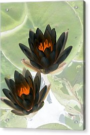 Acrylic Print featuring the photograph The Water Lilies Collection - Photopower 1046 by Pamela Critchlow