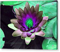 Acrylic Print featuring the photograph The Water Lilies Collection - Photopower 1114 by Pamela Critchlow